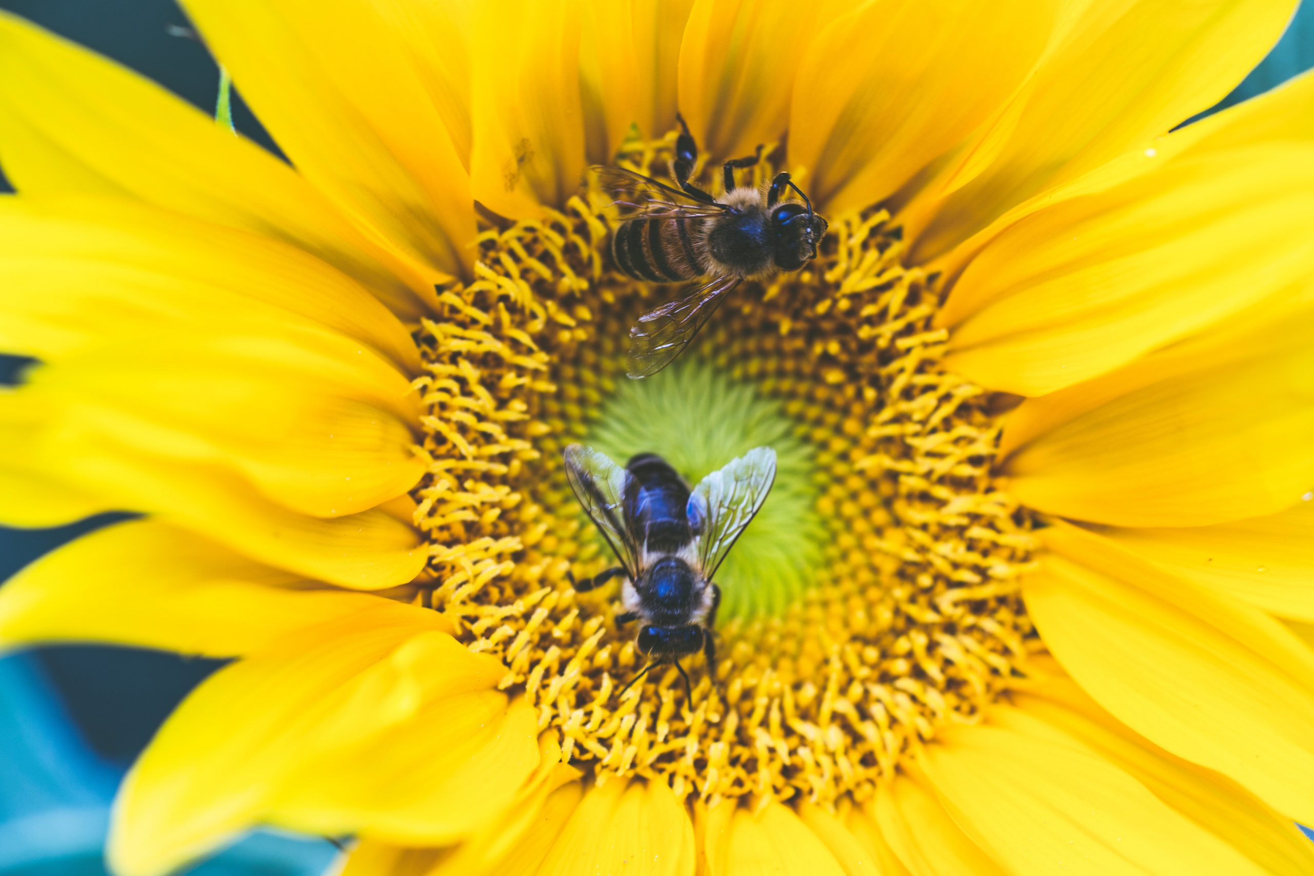 Bees of Wellbeing